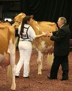 2013 World Dairy Expo - Cara Woloohijan and Wee Acres Spider Clara Bell